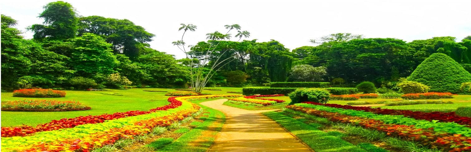 peradeniya gardens-min
